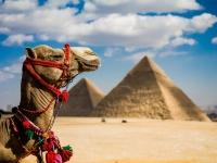 EGIPAT 2015
